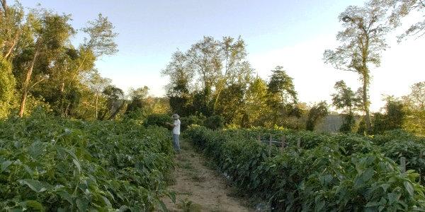 Cowdery Farms