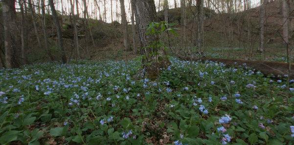 Bluebells Rockhouse Trail